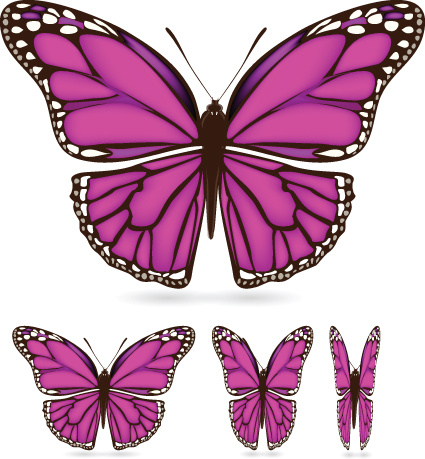 425x459 Different Color Butterfly Sample Vector Free Vector In