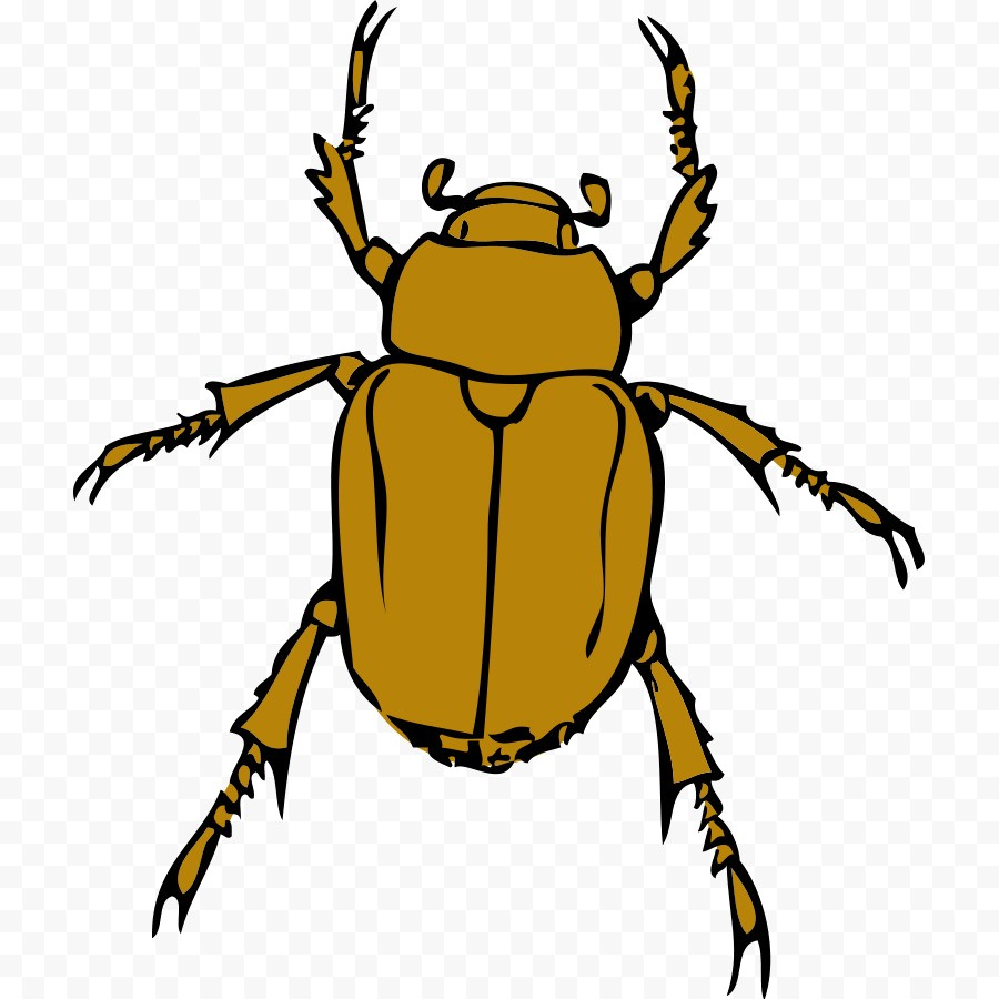 900x900 Kisspng Download Scalable Vector Graphics Clip Art Free Bug