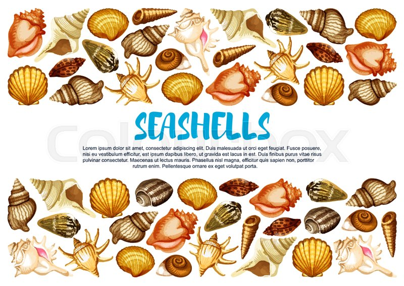 800x567 Seashell Of Marine Mollusc Banner With Border Of Clam, Snail