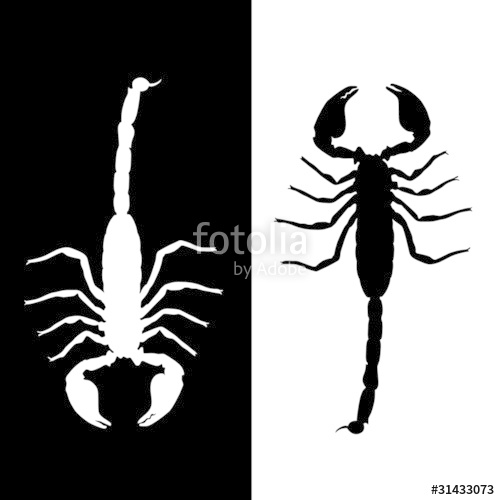 500x500 Scorpion Vector Stock Image And Royalty Free Vector Files On