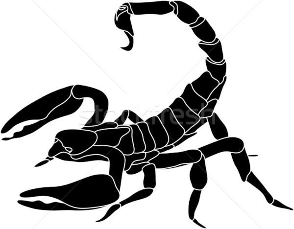 600x468 Scorpion Vector Illustration Pavel Bortel (Pavelmidi) ( 1298403