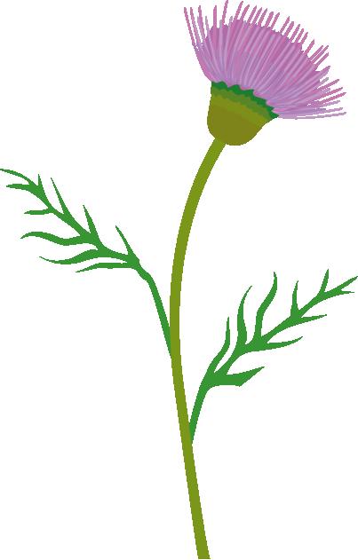 Scottish Thistle Vector