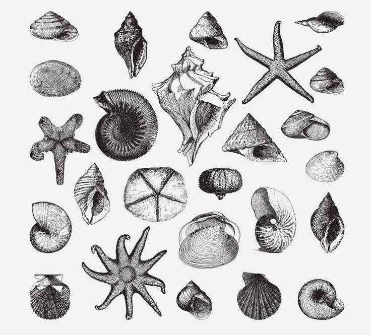 Seashell Vector Free