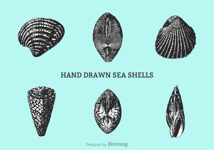 700x490 Free Hand Drawn Shells Vector