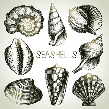 368x368 Seashell Free Vector Download (66 Free Vector) For Commercial Use