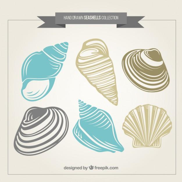 626x626 Seashells Vectors, Photos And Psd Files Free Download