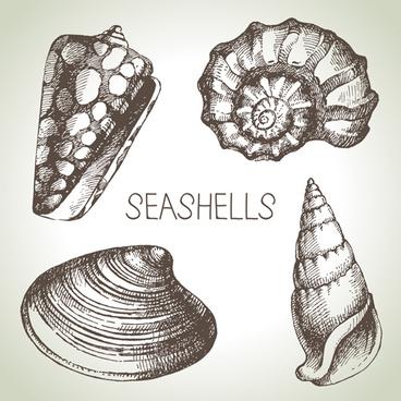 368x368 Seashells Vector Free Vector Download (66 Free Vector) For