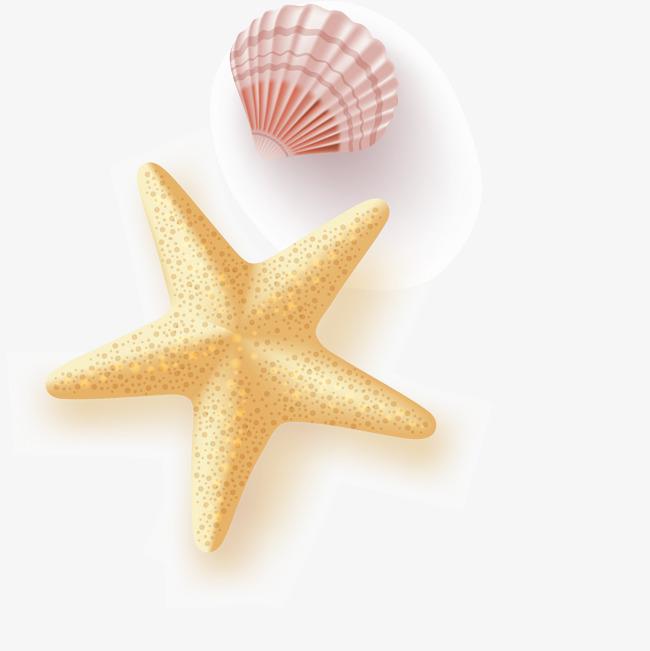 650x651 Starfish Seashell Vector, Starfish Seashells, Beautiful Starfish