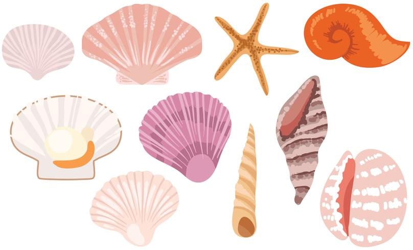 808x490 Vetores Free Seashells