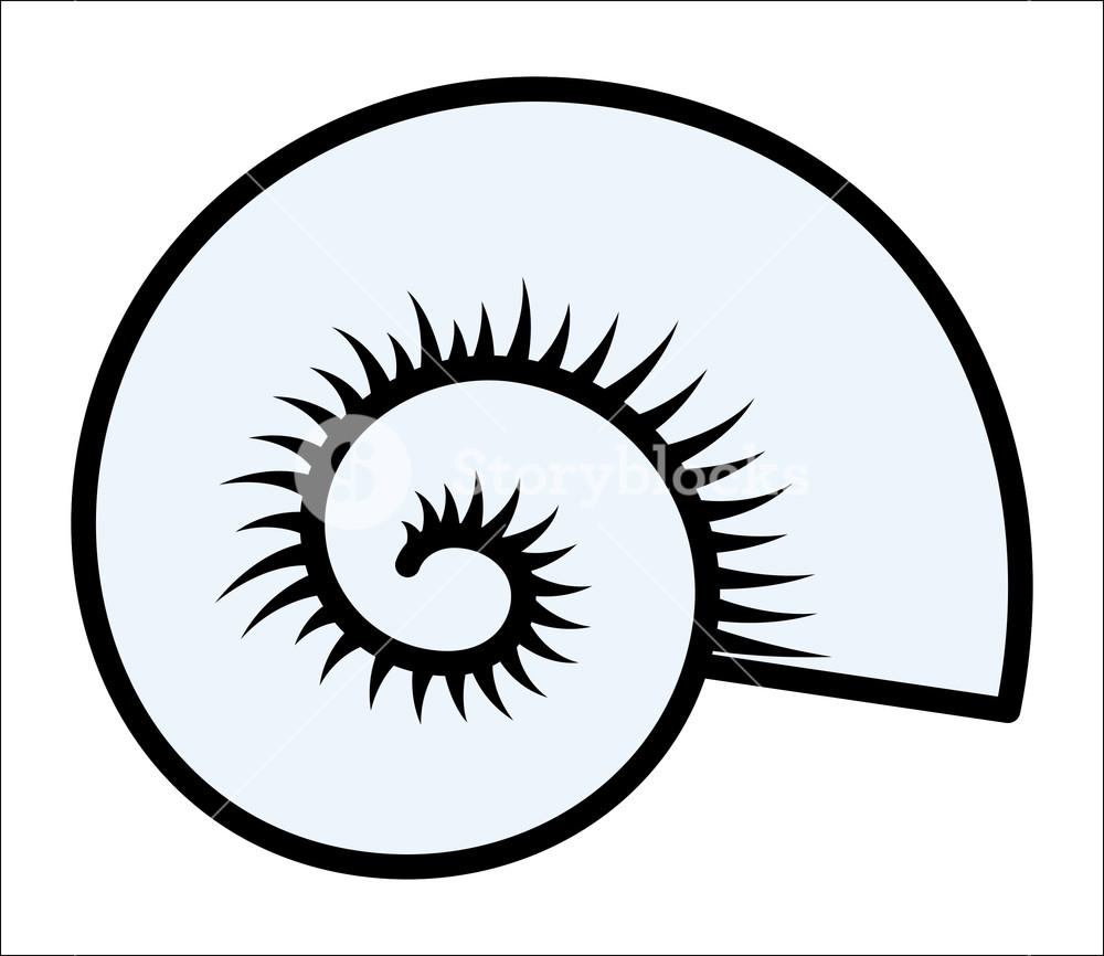 1000x866 Circular Seashell
