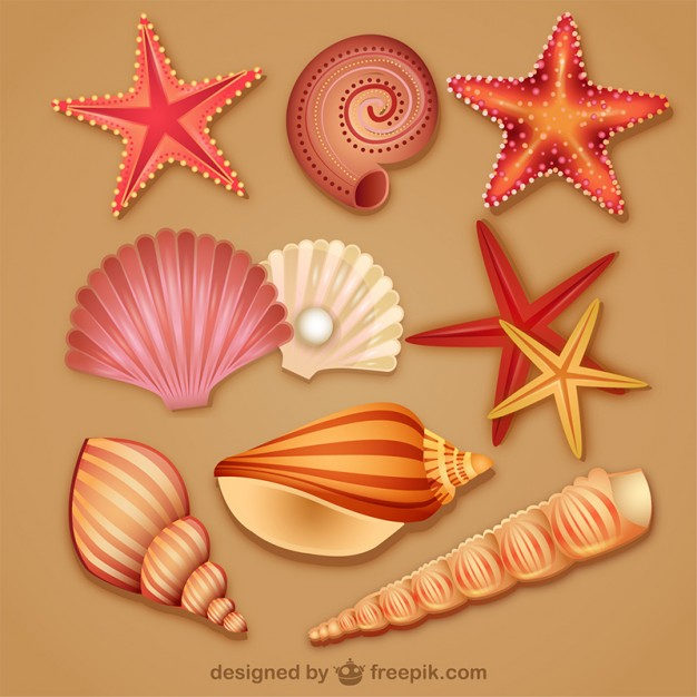 626x626 Modern Lovely Seashell Icon Vector Free Download