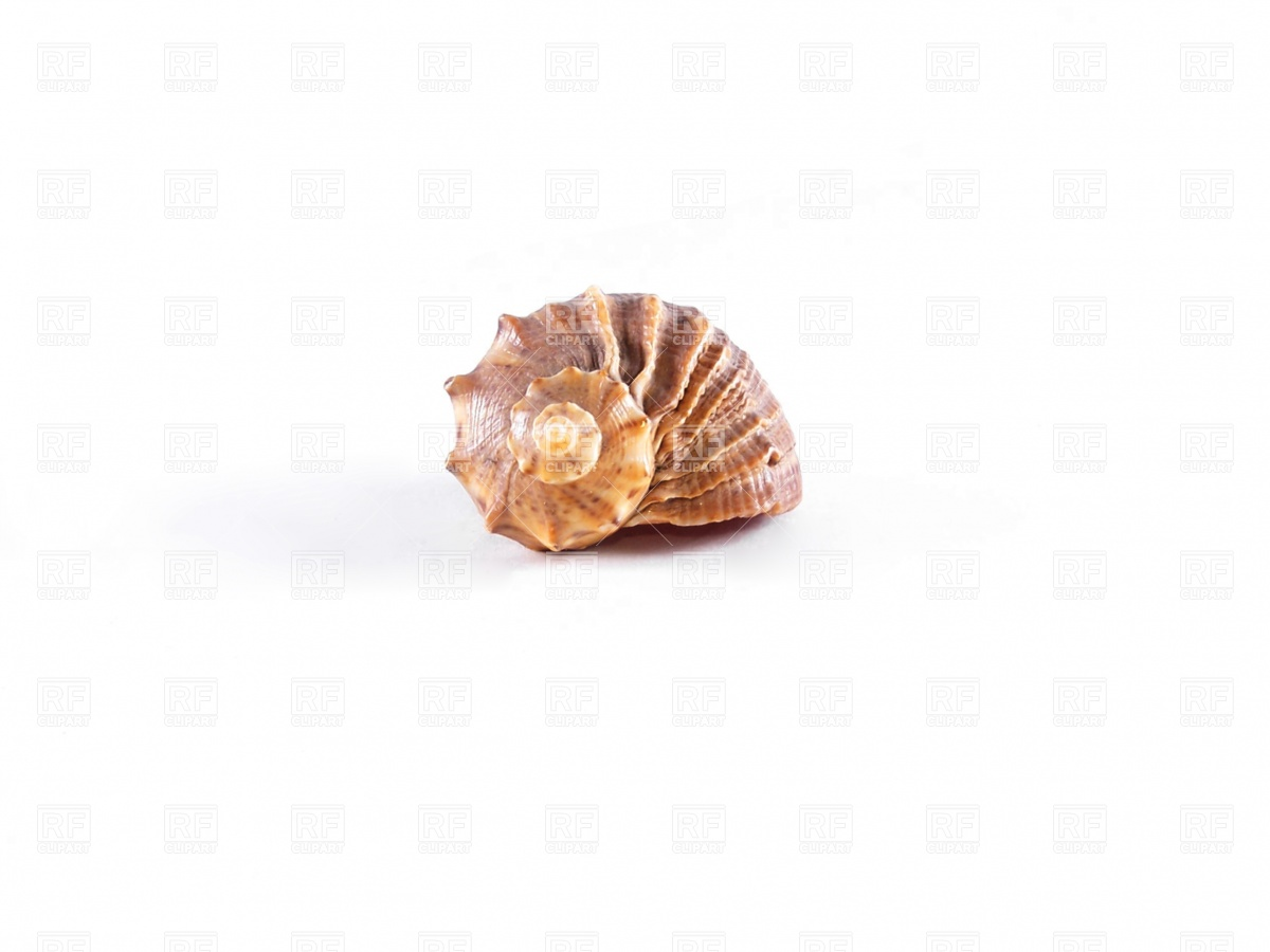 1200x900 Seashell Free Vector Image Vector Artwork Of Objects Prague