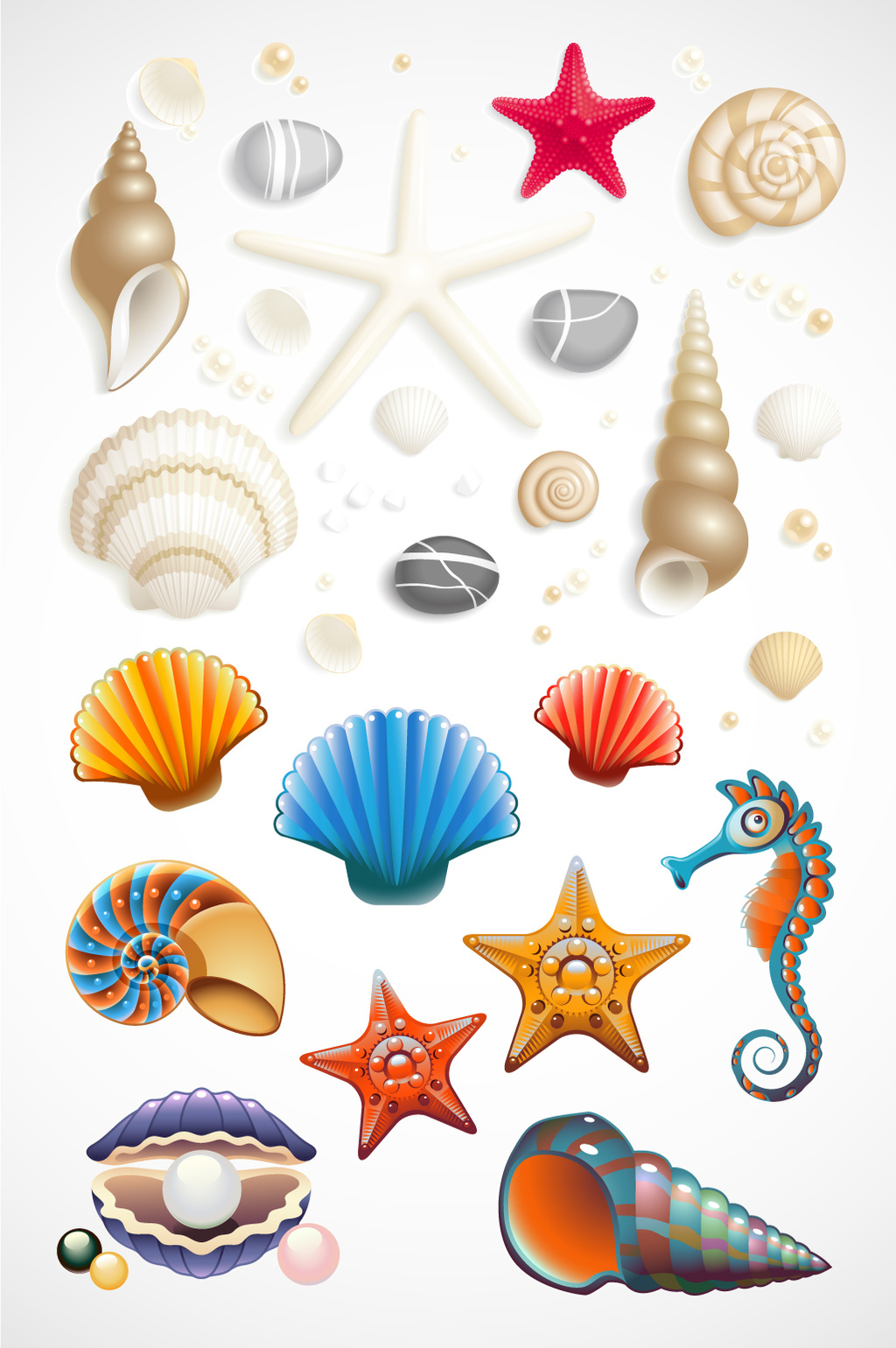 1024x1540 Seashell Vector] Png Images,vector And Psd Free Download