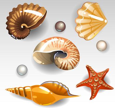 393x368 Seashells Vector Free Vector Download (66 Free Vector) For