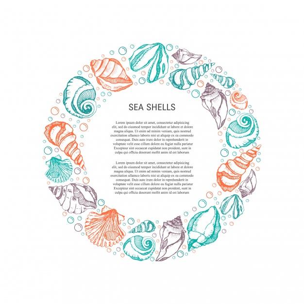 626x626 Coloured Seashells Frame Vector Premium Download