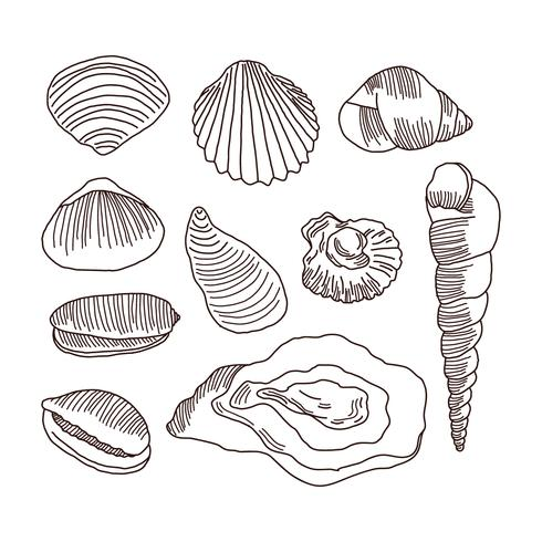 490x490 Detailed Doodles Of Shells