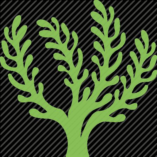 512x512 15 Seaweed Vector Png For Free Download On Mbtskoudsalg