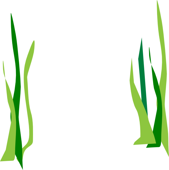 594x597 Seaweed Vector Clipart Best Clipart