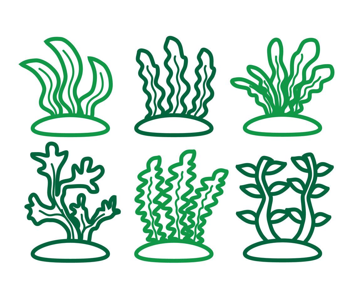 1136x936 Seaweed Vector Vector Art Amp Graphics