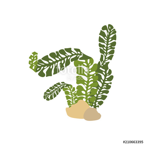 500x500 Seaweed Vector Illustration Stock Image And Royalty Free Vector