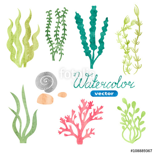 500x500 Set Of Watercolor Seaweed, Corals And Stones Isolated On White