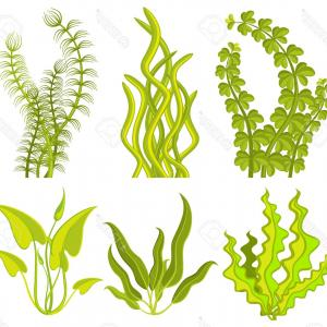 300x300 Underwater Plants Set Seaweeds And Aquatic Marine Vector Lazttweet