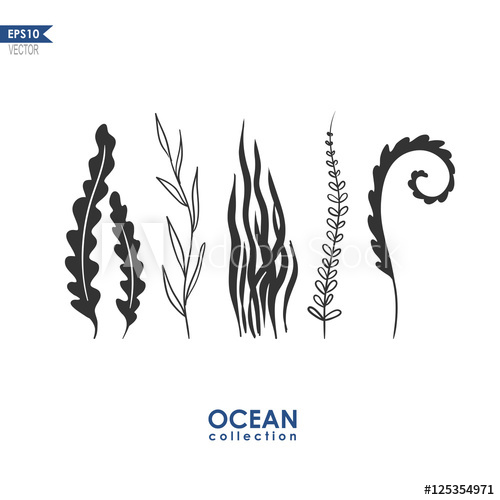 500x500 Sea Plants And Seaweed Isolated On White, Vector Oceanic Plants