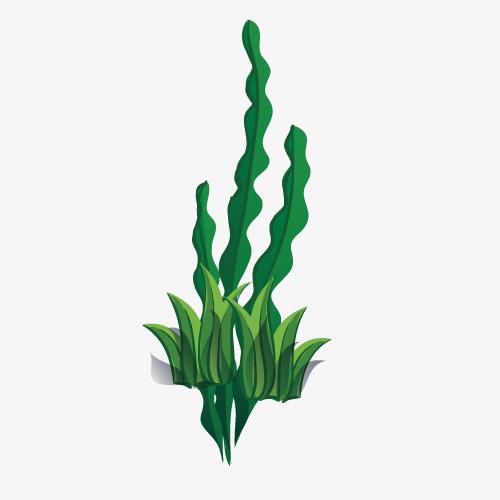 500x500 Cartoon Seaweed, Cartoon Vector, Cartoon, Seaweed Png And Vector