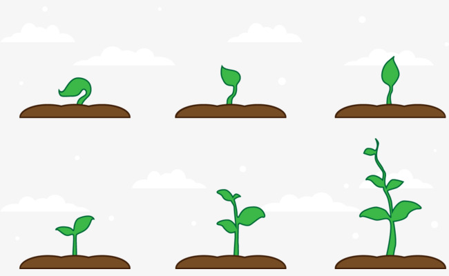 650x400 Vector Seedling Growth, Crop, Cultivate, Growing Vegetables Png