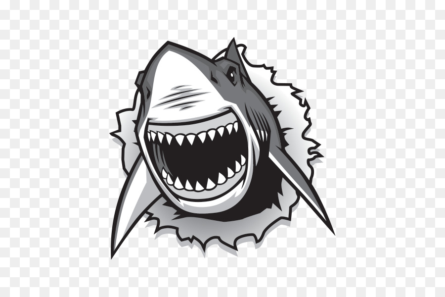 900x600 Great White Shark Drawing Vector Graphics Clip Art
