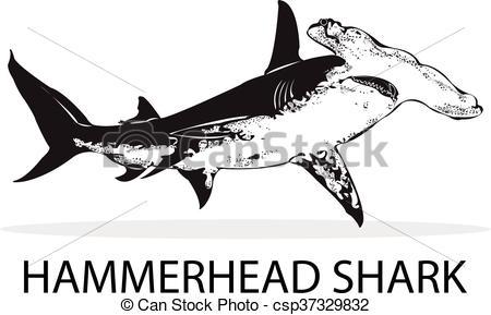 450x289 Hammerhead Shark.
