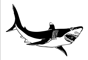 285x194 Shark Graphic