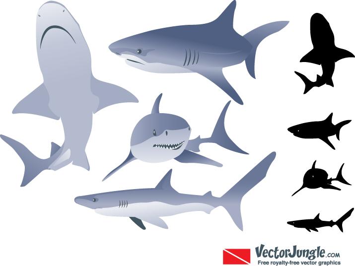 715x536 Shark Vector Vector Art Amp Graphics Freevectorcom