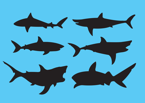 572x407 Great White Shark Vector Free Vector Download In .ai, .eps, .svg