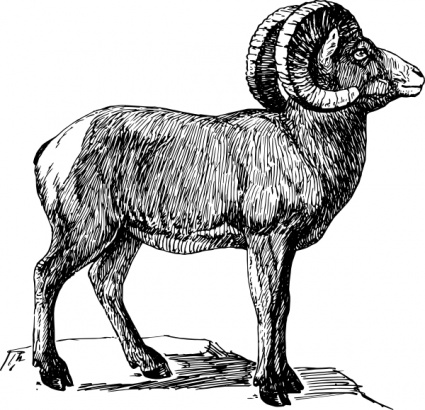 425x410 Free Download Of Sheep Vector Graphics And Illustrations