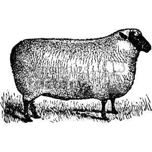 300x300 Royalty Free Vintage Sheep Facing Right Vector Vintage 1900 Vector