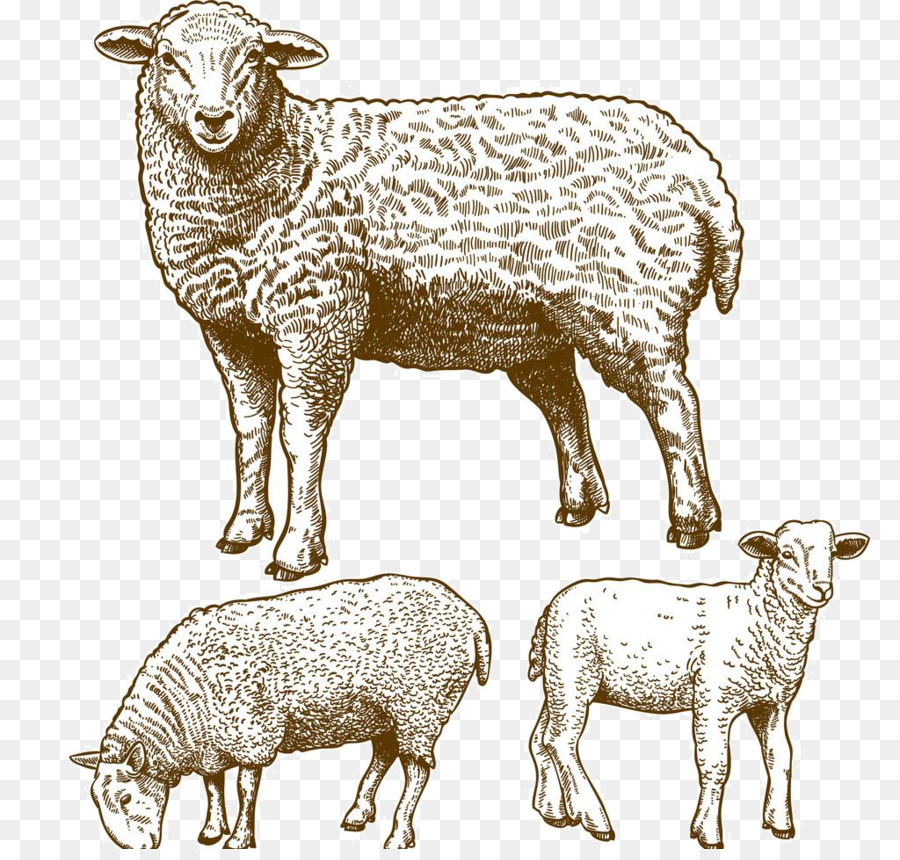900x860 Sheep Grazing Stock Photography Illustration