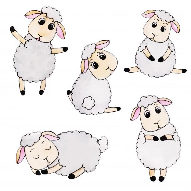 626x626 Sheep Vectors, Photos And Psd Files Free Download