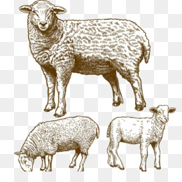 260x260 Sheep Vector Png Amp Sheep Vector Transparent Clipart Free Download