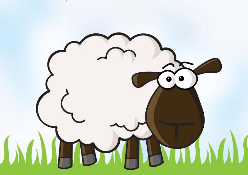 800x566 Sheep Vector Illustration