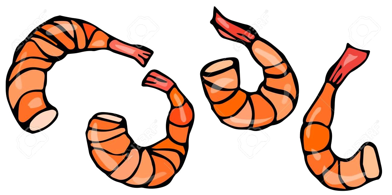 1300x649 77690067 Set Of Cooked Shrimps Vector Seafood Prawn Realistic
