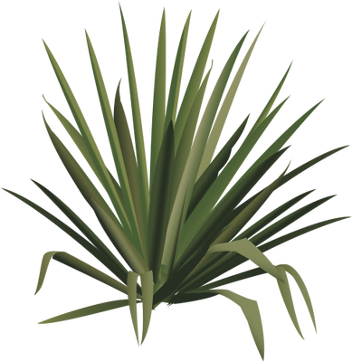 389x400 Collection Of Free Cactus Vector Desert Shrub. Download On Ubisafe