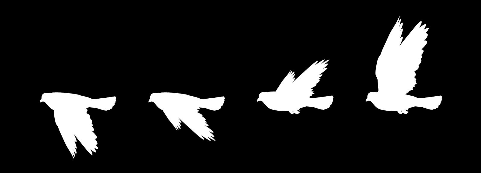 1600x577 Simple Flying Bird Vectors