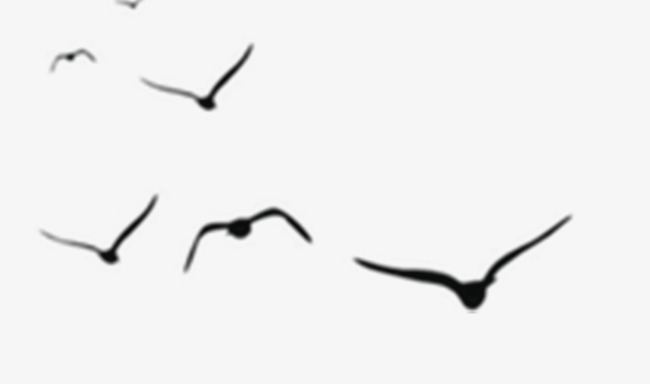 650x384 Simple Black Vector Flying Birds, Birds, Fly, Flight Png Image And