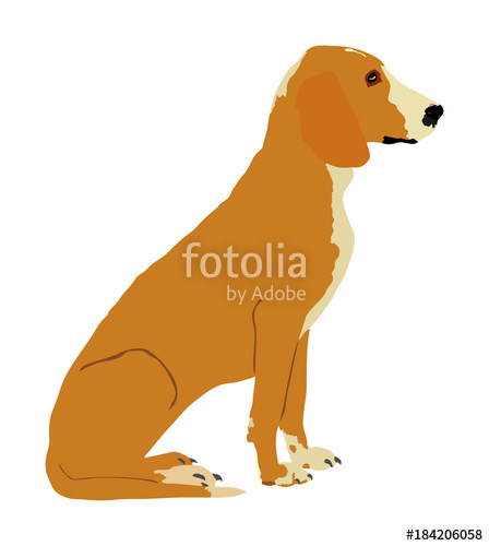 448x500 Portrait Of Sitting Schiller Hound Dog Vector Illustration