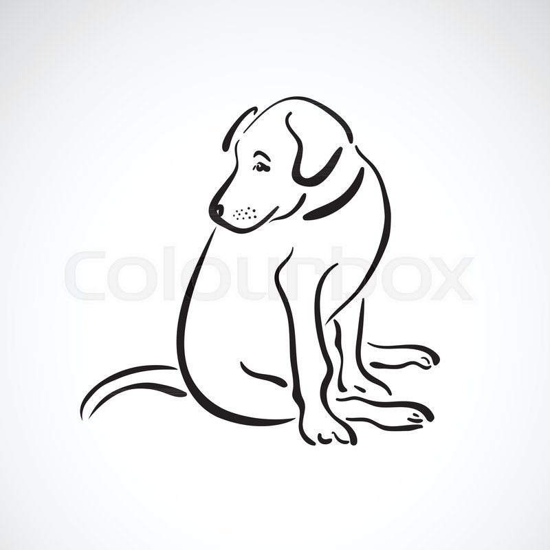 800x800 Vector Of Sitting Dog(Labrador Retriever) On White Background, Pet