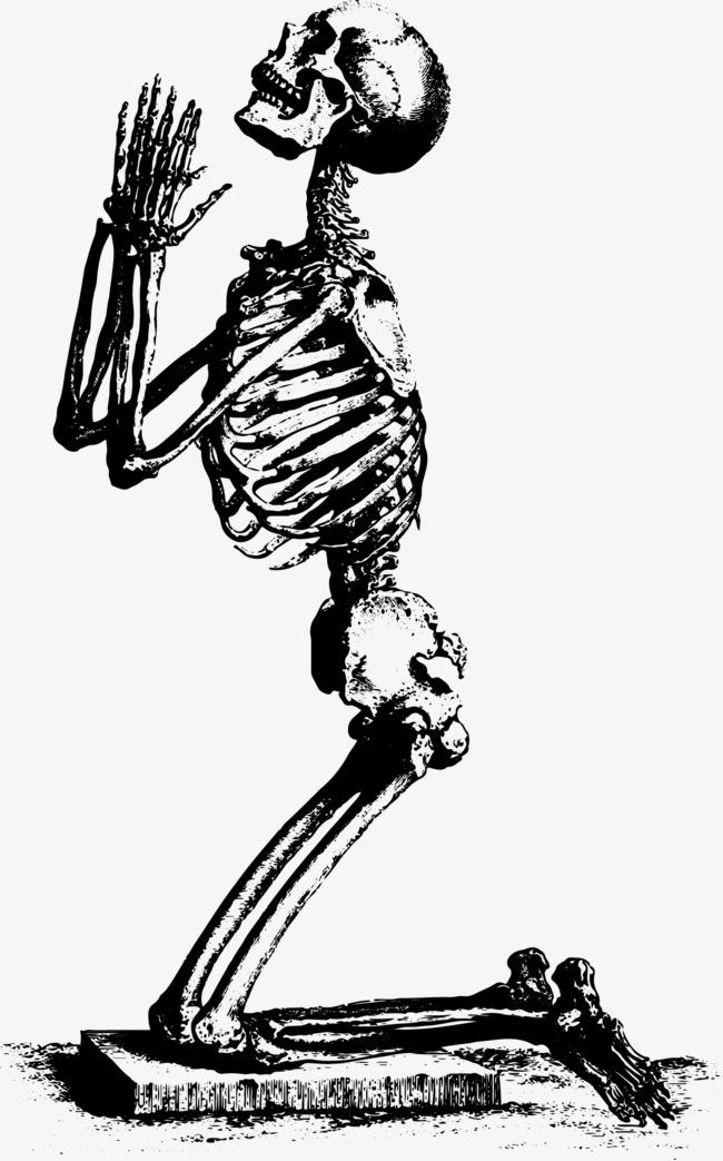 650x1043 Skeleton Skeleton Vector Material, Skull, Skeleton, Vector Png And