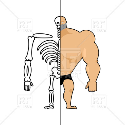 400x400 Human Structure