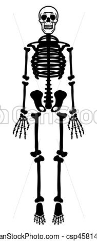 189x470 Skeleton. Vector Illustration Of The Human Skeleton On White.