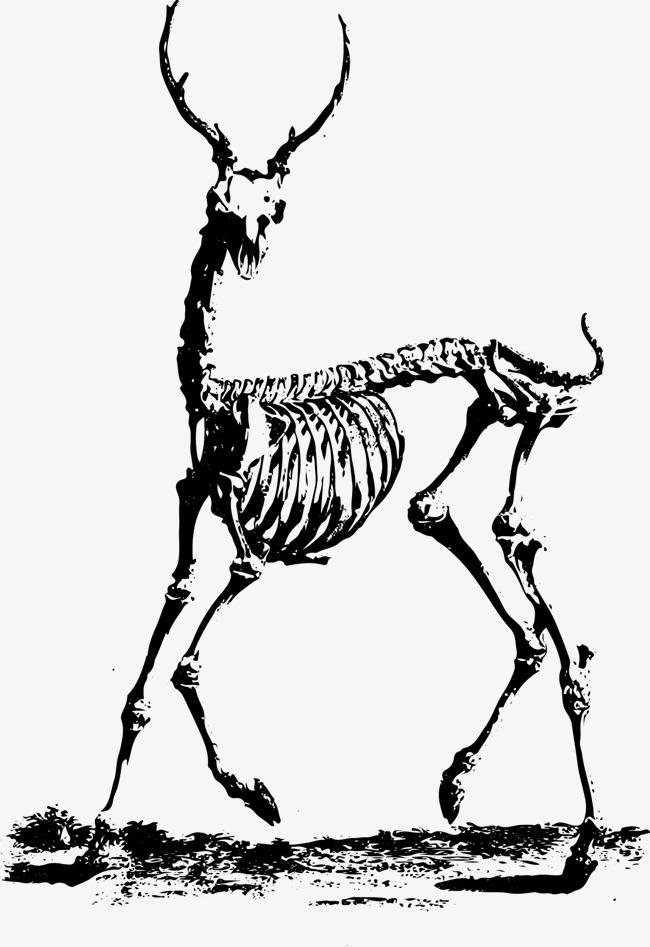 650x947 Skeleton Skeleton Vector Material, Skull, Skeleton, Vector Png And